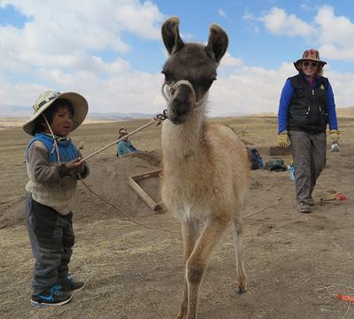 Baby llama and herders