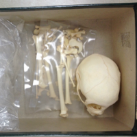 Primate Skeletal Collection