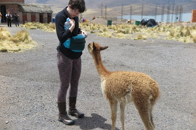 Lauren greeted by a baby vicuna at a tourist stop between Arequipa and Puno.