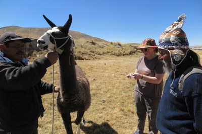 Rachel uses this opportunity to advance her research on camelid fibers.